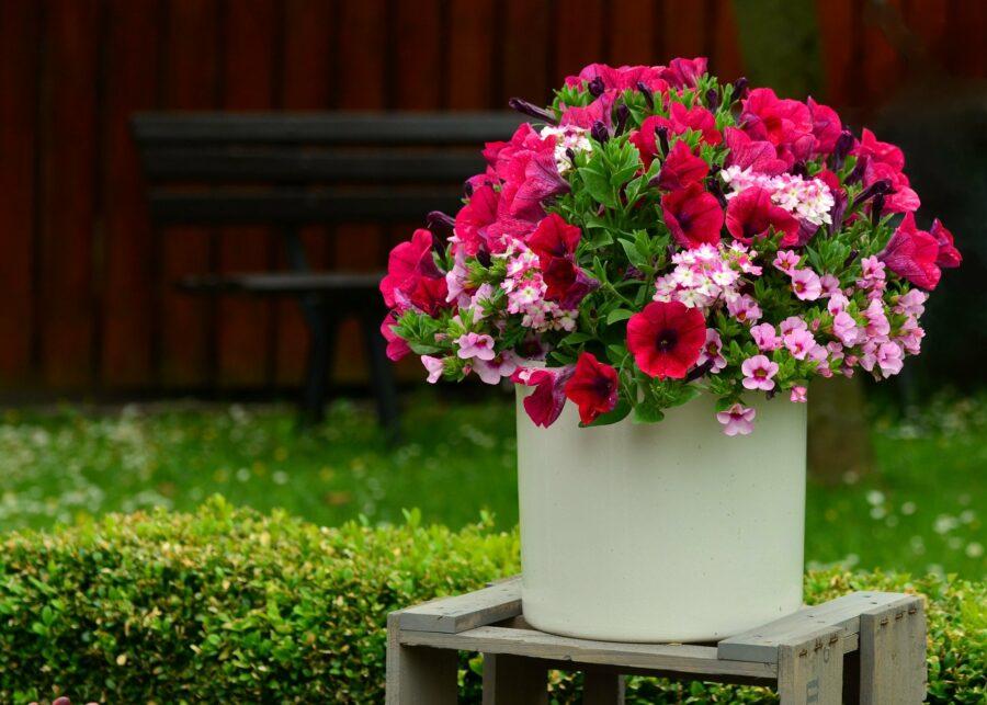 Pielęgnacja kwiatów ogrodowych